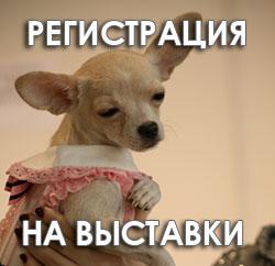 Регистрация собак на выставку г. Ставрополь