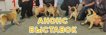 Анонс выставок собак г. Ставрополь
