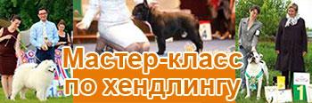мастер-класс выставочный хендлинг собак в Ставрополе