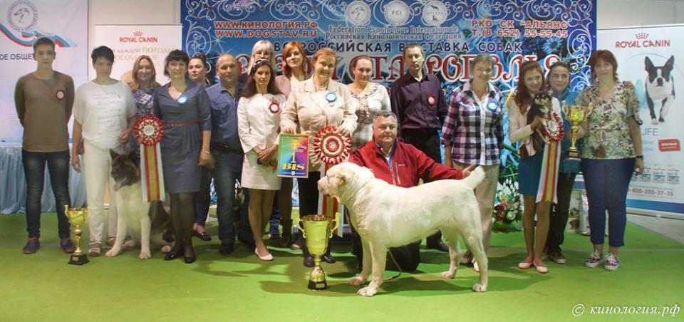 самыеглавные победители выставка собак в Ставрополе