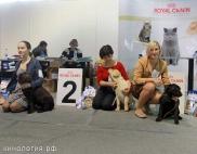 Участники выставки_1