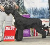 Best Junior_5