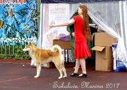 монопородная выставка Акита-Ину_2