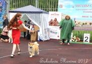 монопородная выставка Акита-Ину_5