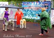 монопородная выставка Акита-Ину_7
