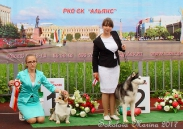 конкурс ЮНЫЙ ХЕНДЛЕР_1