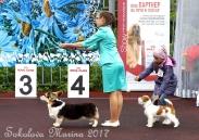 конкурс ЮНЫЙ ХЕНДЛЕР_3