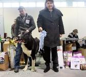 Монопородная выставка САО 15 декабря 2013 Ставрополь