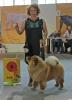 Всероссийская выставка, Краевой клуб служебного собаководства ДОСААФ_10