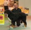 Всероссийская выставка, Краевой клуб служебного собаководства ДОСААФ_1