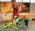 Всероссийская выставка, Краевой клуб служебного собаководства ДОСААФ_2