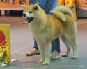 Всероссийская выставка, Краевой клуб служебного собаководства ДОСААФ_4