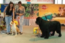 Всероссийская выставка, Краевой клуб служебного собаководства ДОСААФ_5
