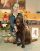 Всероссийская выставка, Краевой клуб служебного собаководства ДОСААФ_6