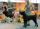 Всероссийская выставка, Краевой клуб служебного собаководства ДОСААФ_7