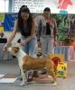 Всероссийская выставка, Краевой клуб служебного собаководства ДОСААФ_8