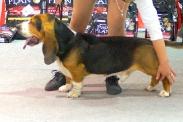 Выставка собак в Ставрополе_8