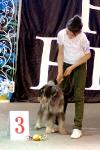 Выставка собак в Ставрополе_2