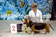 Выставка собак в Ставрополе_4