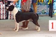 Выставка собак в Ставрополе_5