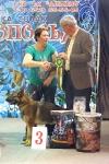 Выставка собак в Ставрополе_1