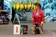 Выставка собак в Ставрополе_3