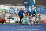 Международная выставка собак