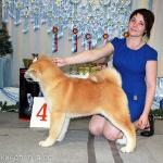 Всероссийская выставка (САС Ч РКФ) 14 декабря 2013 г.